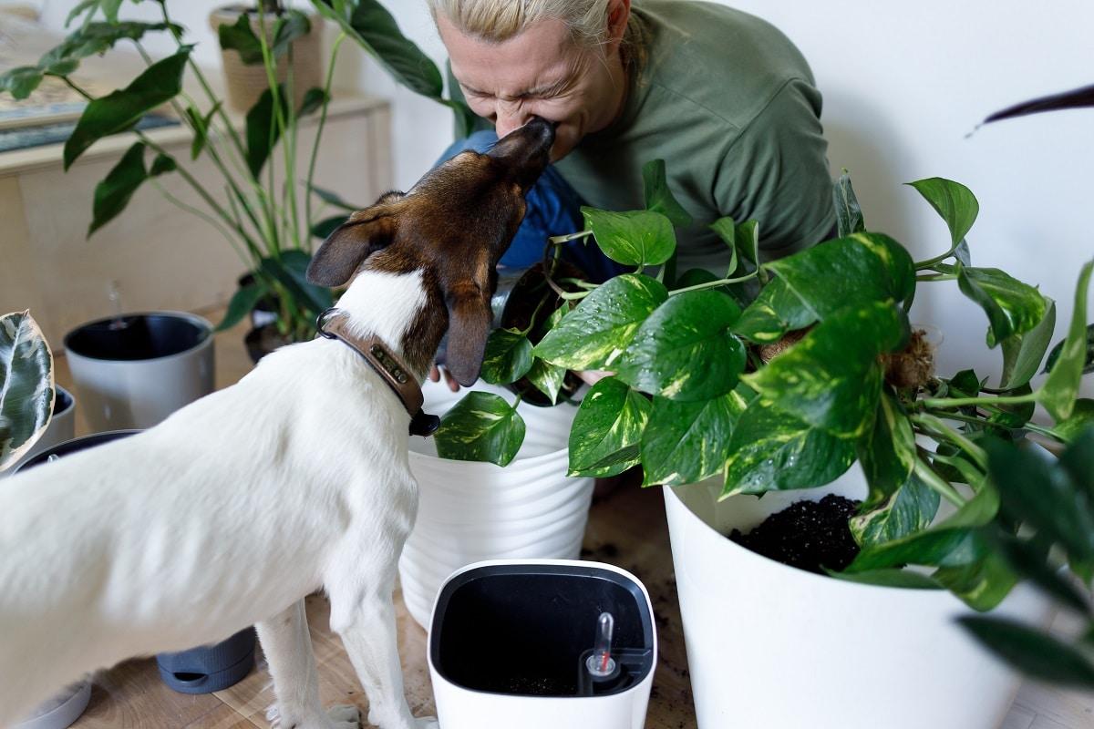 Advice For New Dog Owners - Advice For New Dog Owners