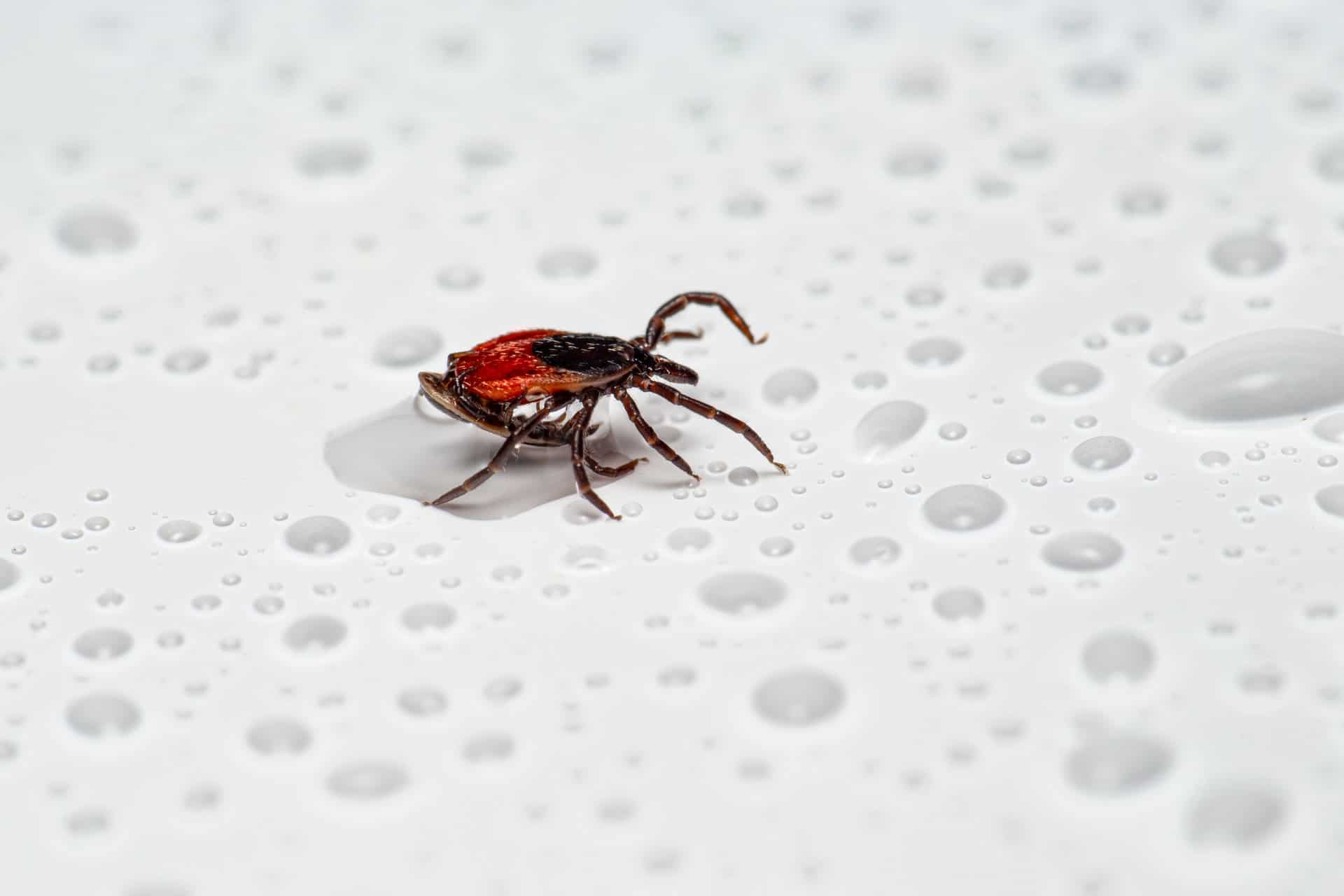 erik karits Fa RLALny8M unsplash - The Problem With Cockroaches: Health Risks and More